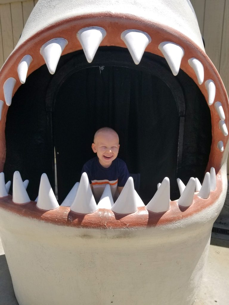 boy in shark